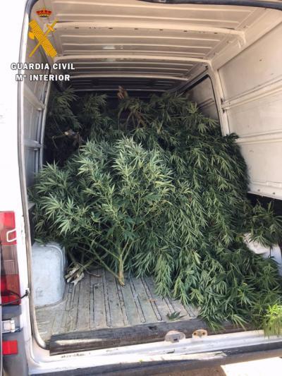 SUCESOS | Continúa la persecución a los traficantes de marihuana