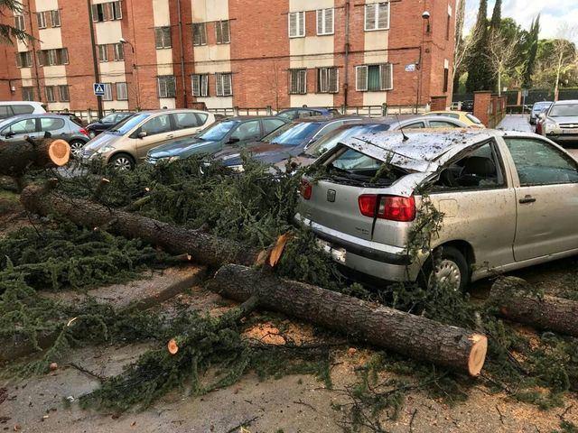 El fuerte viento que azota Talavera provoca la caída de varios árboles