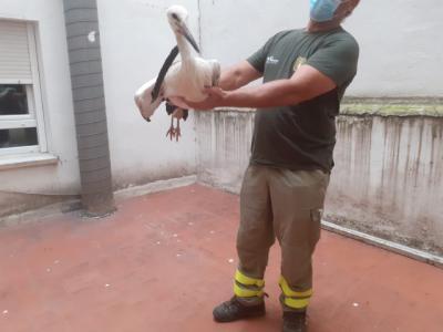 TALAVERA | Encuentran una cigüeña herida en un patio de luces