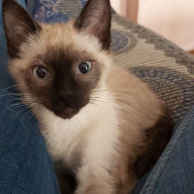 Buscan desesperadamente a la gata desaparecida en Talavera