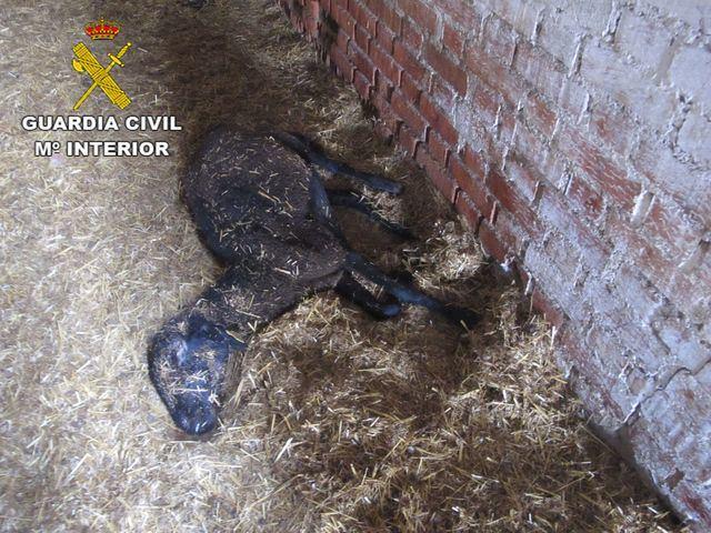 La Guardia Civil investiga a tres personas por abandono de animales en dos actuaciones