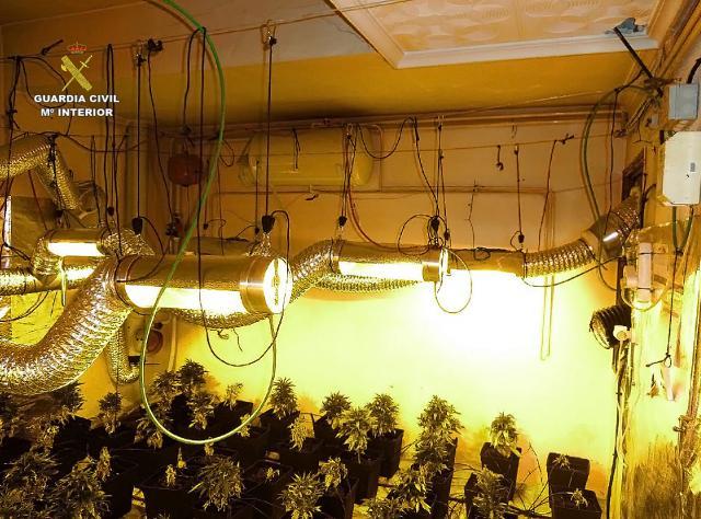 Detenido un varón con antecedentes por cultivar marihuana en una casa deshabitada en Campo de Criptana