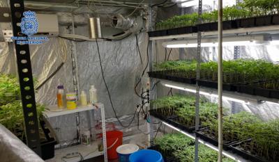 Desmantelados en Argés y Olías del Rey dos laboratorios clandestinos dedicados a la producción de cannabis
