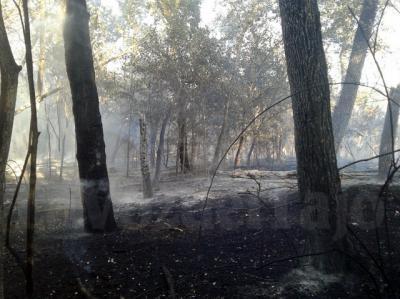 ASÍ HA QUEDADO LA ISLA | Estabilizado el incendio en la ribera del Tajo