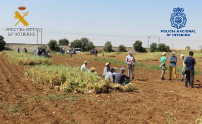 AGRICULTURA | Inspecciones de trabajo en el campo