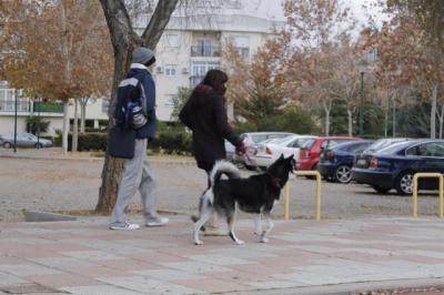 REGIÓN | En medio año, la ley de bienestar animal