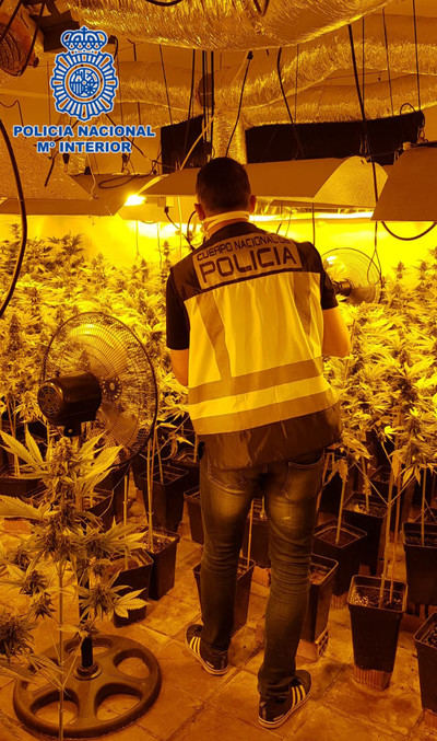 La Policía Nacional desmantela en Pepino una plantación de 1.720 plantas de Cannabis Sativa