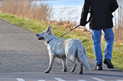COVID-19   Advertencia municipal sobre las mascotas