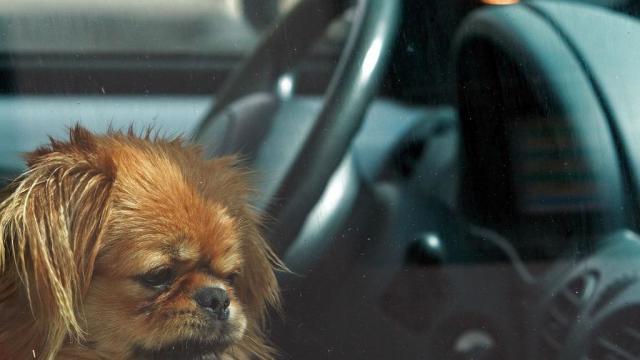 magen de un perro dentro de un vehículo / Istock