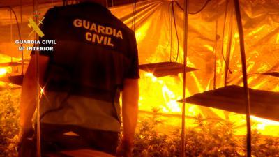 Tres nuevas plantaciones de marihuana desmanteladas en Domingo Pérez
