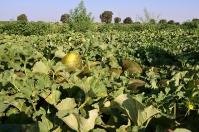 La Consejería de Agricultura amplía el plazo de presentación de la solicitud única de la PAC