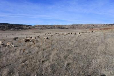 ACTUALIDAD | Dinero para nuestra agricultura y ganadería