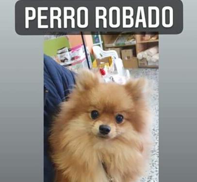 MIL EUROS | Ofrecen importante recompensa por recuperar a un perro robado en Talavera