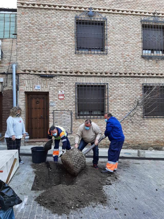 TOLEDO | El Ayuntamiento embellece la ciudad plantando árboles