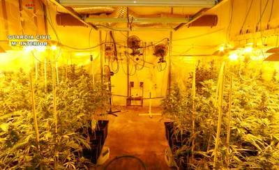 La Guardia Civil detiene a un hombre de 70 años e interviene 735 plantas de marihuana