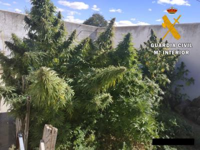 La Guardia Civil intervien 50 kilos de marihuana en la provincia de Toledo