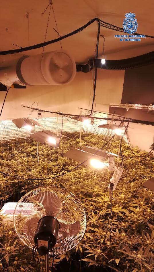 Desmantelado un laboratorio clandestino con 886 plantas de marihuana