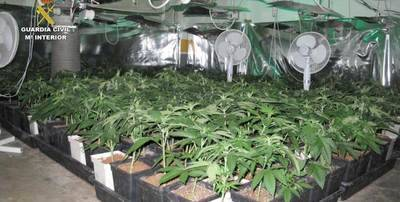 Cuatro detenidos en Cabanillas del Campo por cultivar marihuana