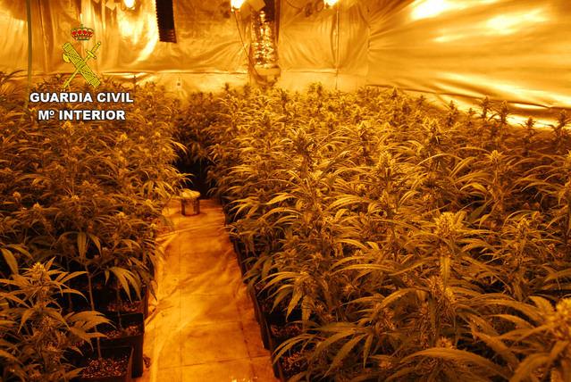 La Guardia Civil desmantela tres plantaciones de marihuana con más de 2.000 plantas