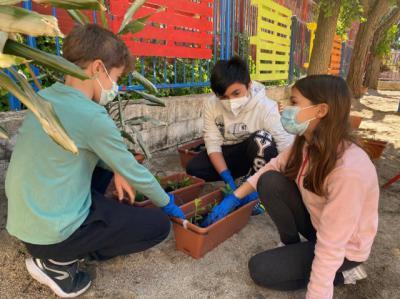 El bonito huerto urbano que han realizado los alumnos del Rafael Morales