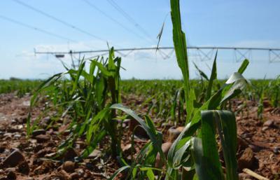 120.000 agricultores y ganaderos de CLM han solicitado ayudas de la PAC