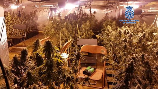 Desmantelado en Pepino un laboratorio clandestino donde se cultivaba marihuana