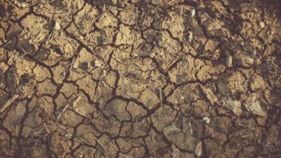 Piden medidas excepcionales para los ganaderos afectados por la sequía