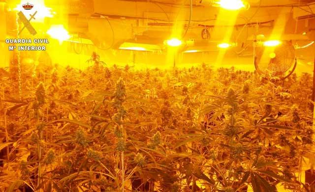 Desmantelan dos laboratorios de marihuana en Seseña
