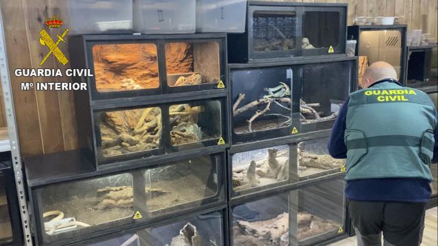 SERPIENTE | La 'supuesta víctima' de la cascabel tenía... ¡40 reptiles peligrosos!