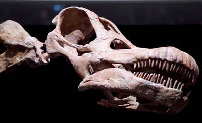 El yacimiento de Lo Hueco mostrará muy pronto un nuevo titanosaurio