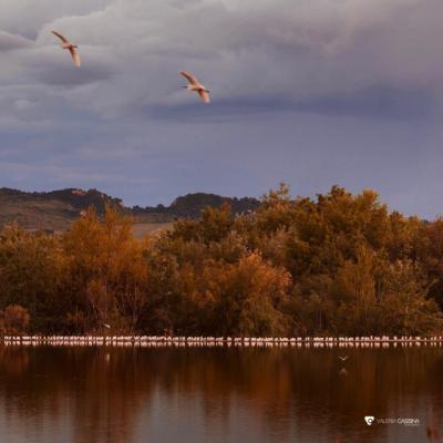 TALAVERA | 'Si te dejan volar... mantén la distancia', por Valeria Cassina