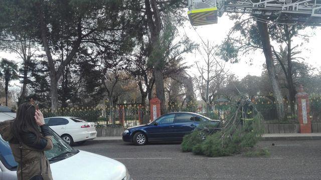 El viento derriba algunas ramas que se precipitan en la avenida de Extremadura