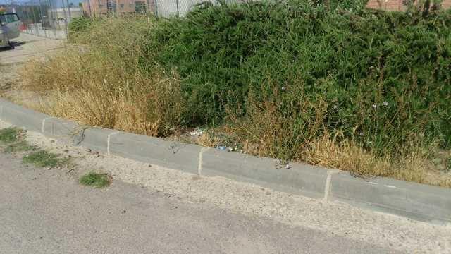 La maleza invade peligrosamente la zona de la universidad de Talavera