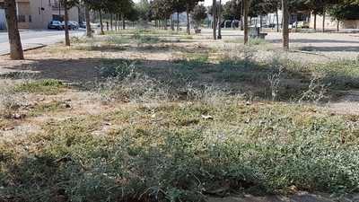 Las malas hierbas vuelven a ser las ocupantes de las calles talaveranas