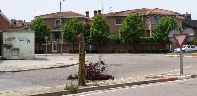 El fuerte viento se lleva varios árboles en Talavera