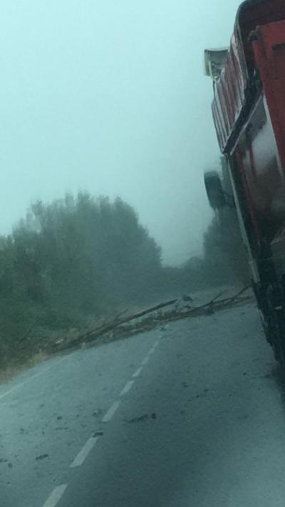 VÍDEO | Cae un árbol sobre la carretera de Calera y Chozas