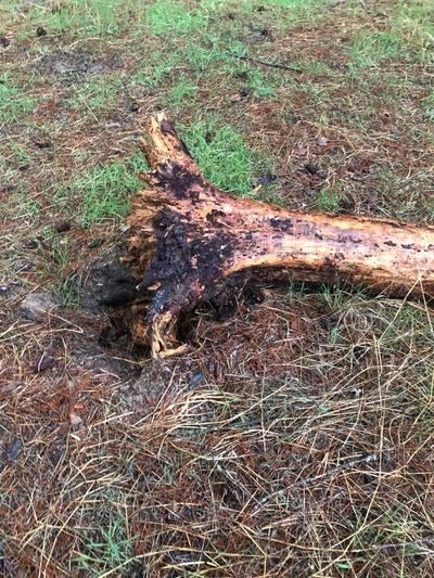 La tormenta fulmina un árbol en el Cerro Negro