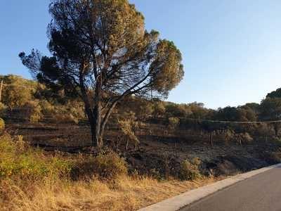 Así se ha quemado el monte junto al embalse de Cazalegas