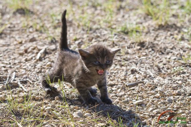 Cría de gato | Archivo
