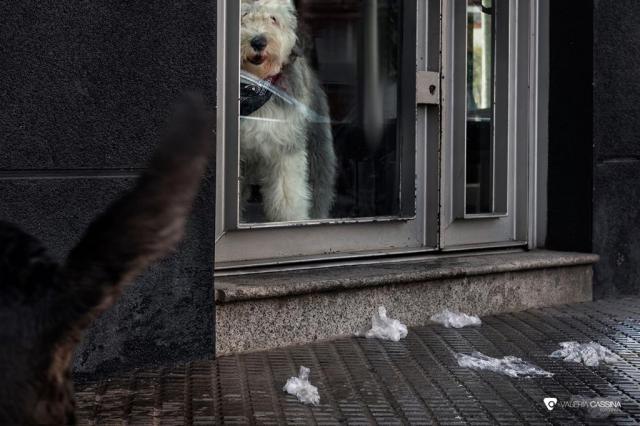 Imágenes de una cuarentena': ¿Quién es el animal?