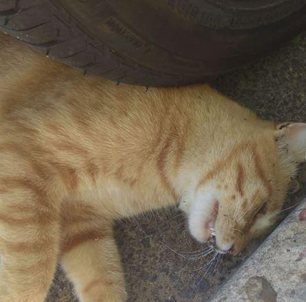 ATENCIÓN | Denuncian asesinatos masivos de gatos y otros animales