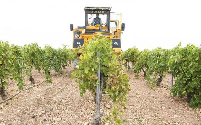 Ayudas agrícolas, listas de espera y devolución del IVA, a debate en las Cortes