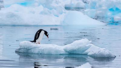 Nuevo récord de temperatura en la Antártida