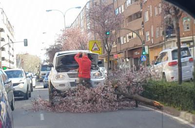 Un árbol cae sobre un coche en marcha en Talavera