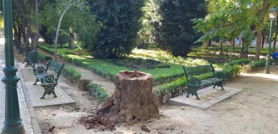 TALAVERA | Retiran el árbol caído en los Jardines del Prado