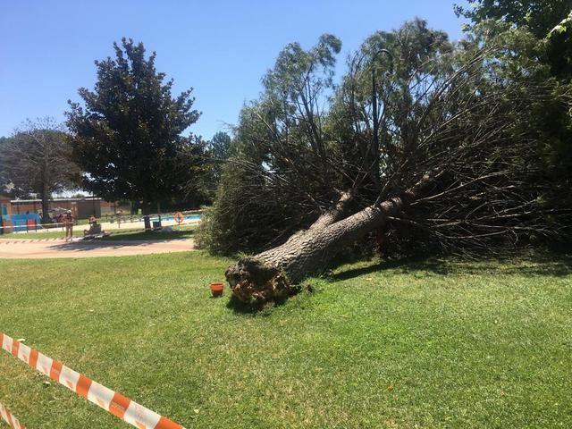Cae otro árbol en una piscina municipal de Talavera