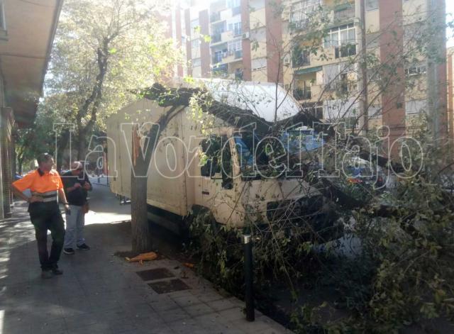 Cae un árbol sobre una furgoneta cuando circulaba por la callle Segurilla de Talavera