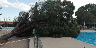 Un árbol se desploma sobre una piscina pública en Talavera