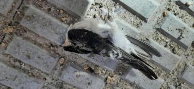 TALAVERA | Una mujer tira 16 nidos de avión común causando la muerte de sus aves