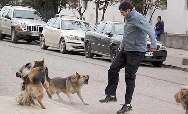 Dos personas atacadas por perros en Guadalajara y Talavera La Nueva